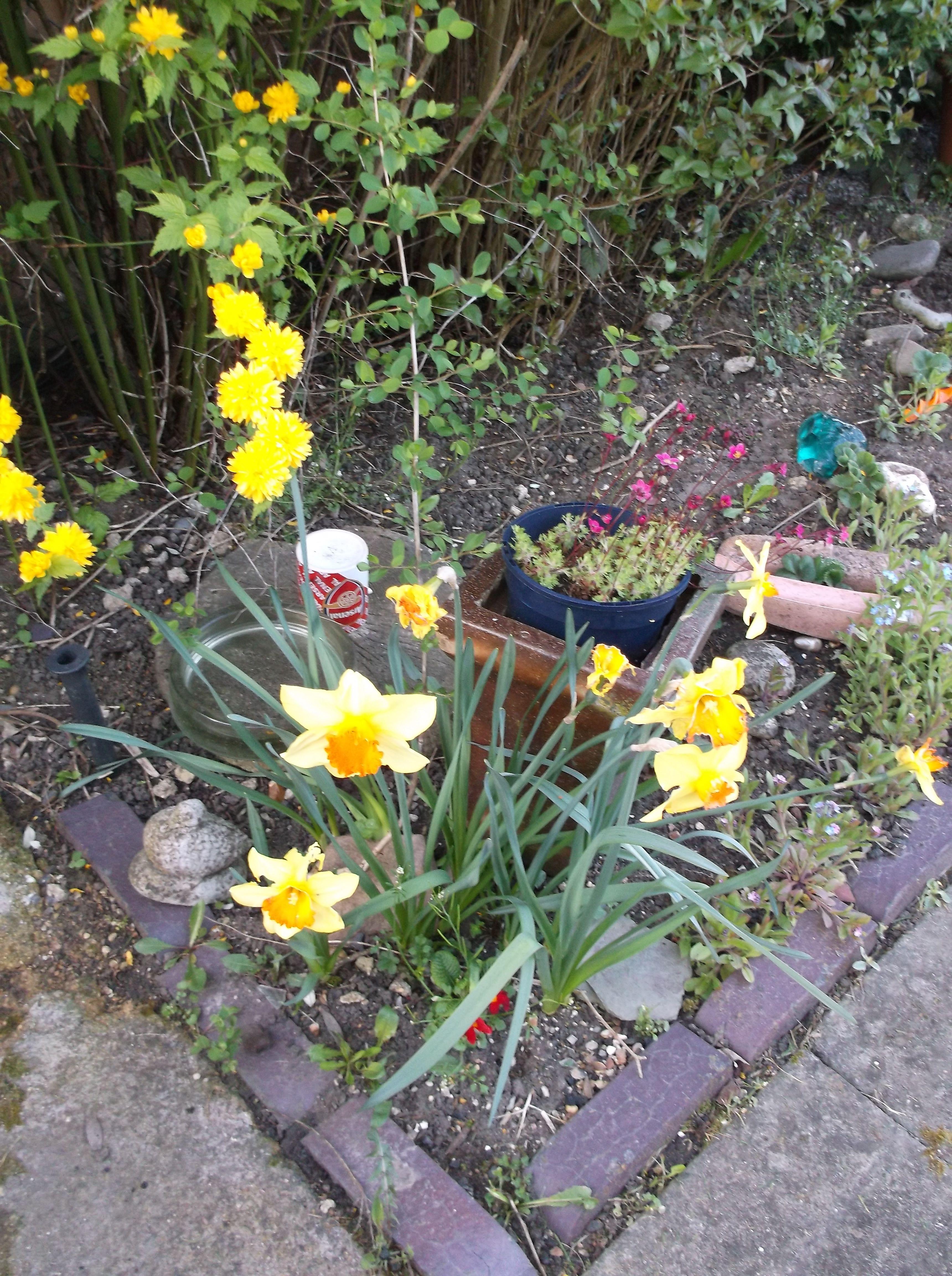 National gardening Week pic